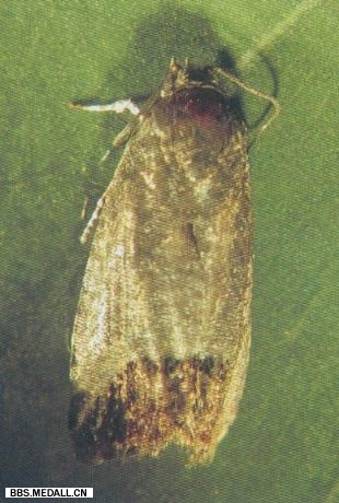 1994-10-5 Of to clarify a moth to the historical wrong case