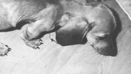 1957-11-3 Satellite of the Soviet Union contained dog II God