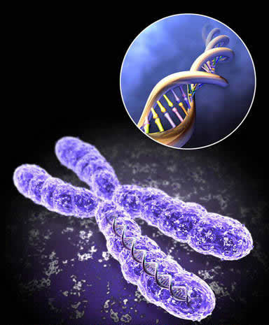 1999-12-1 Scientists complete decipher the first 22 pairs of human chromosomes genetic code