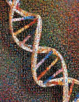 The scientists published for the first time the human genome