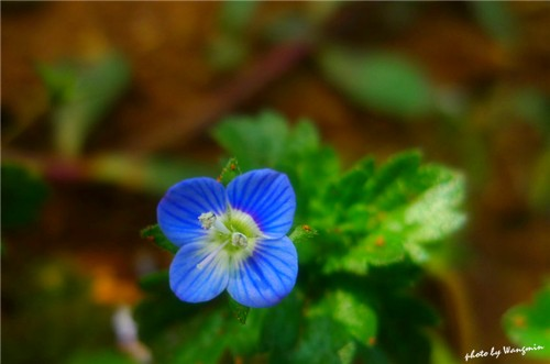 3-10-Birthday Flowers:Fillip speedwell-Florid:In addition to Ecuador-Birthstone:Coral